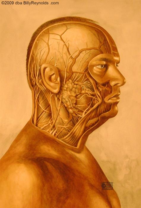Face Anatomy_2 copy.jpg
