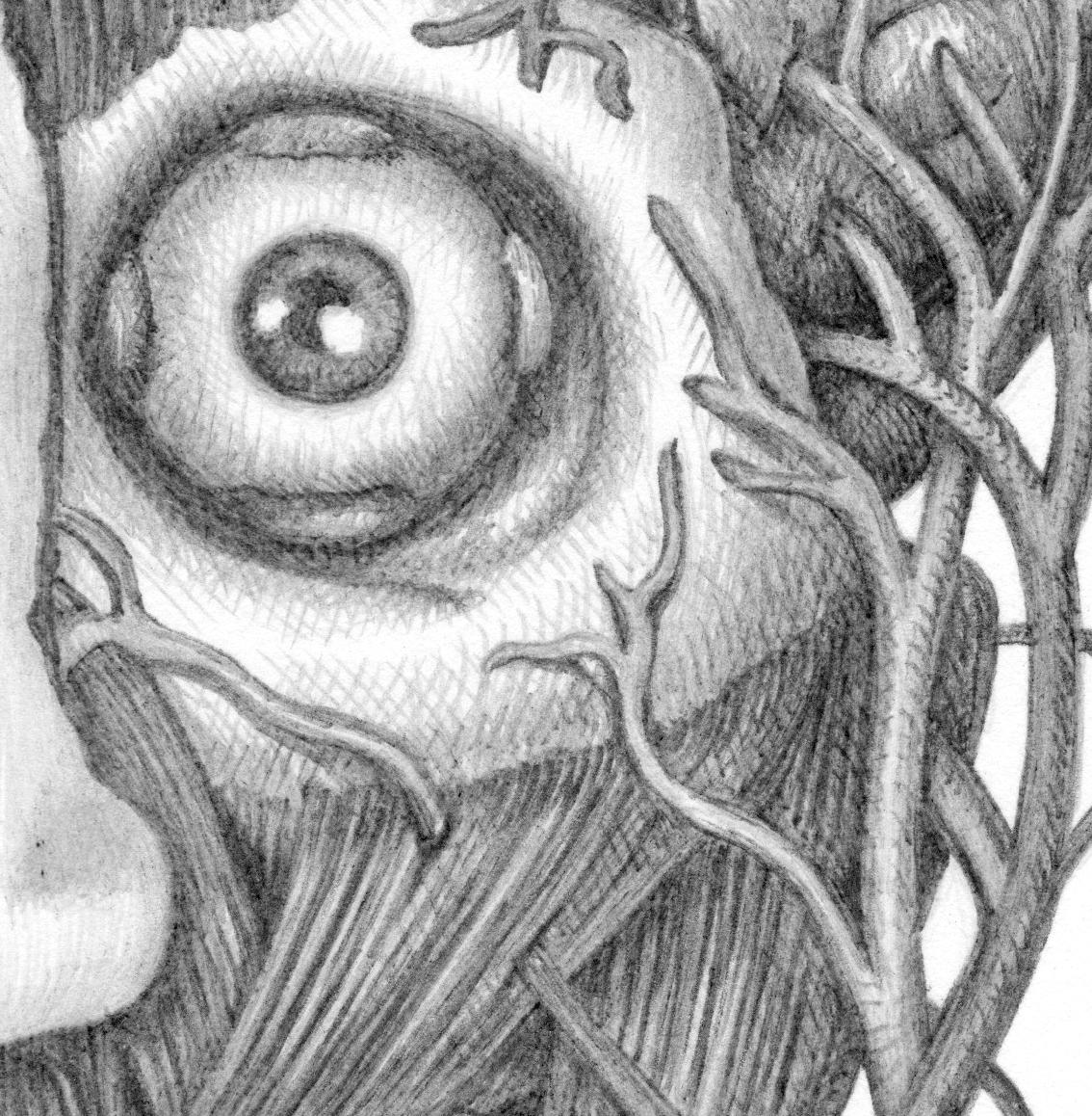 Vanessa_Detail